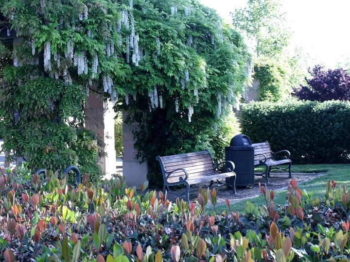 Green wisteria covered arbor and seating area