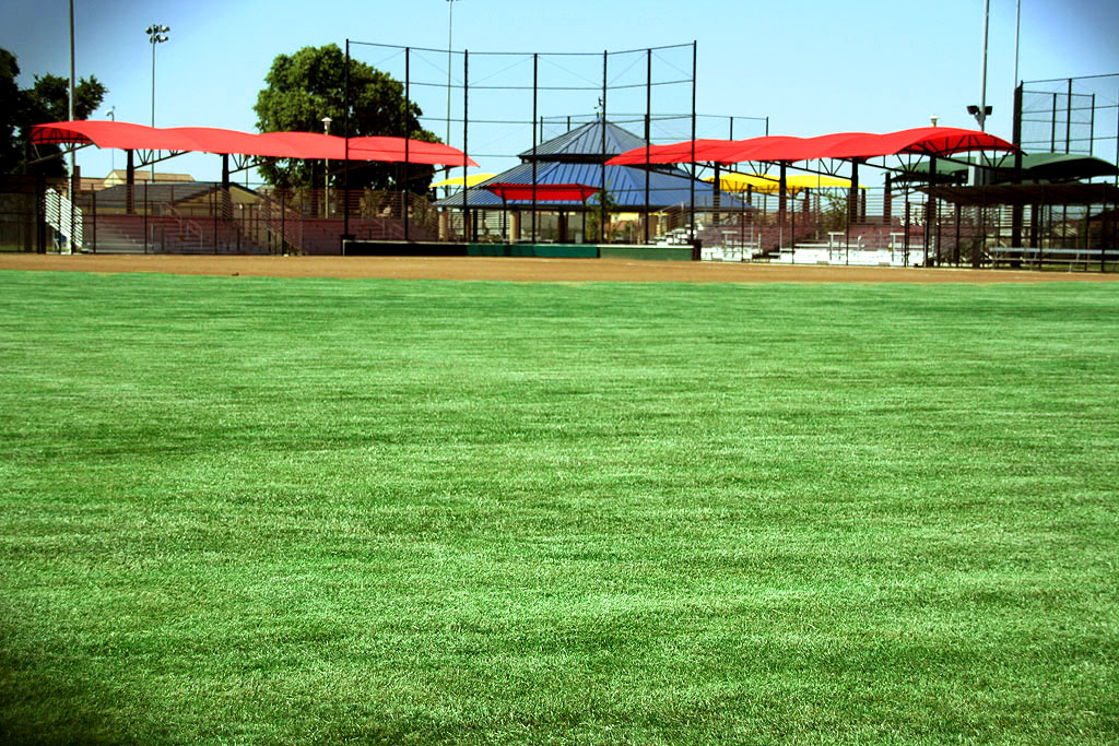 Vibrant green field in the softball complex